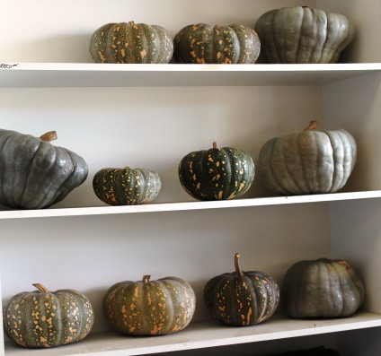 pumpkins-on-the-shelf