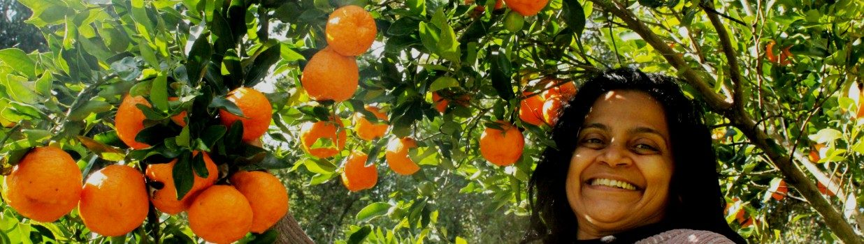 Use home-grown mandarins to make orange liqueur